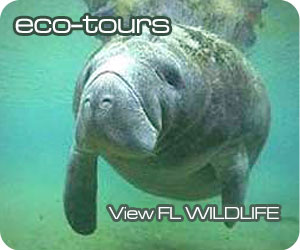 Naples Eco-Tours